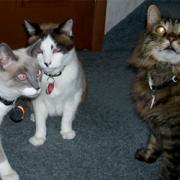 Debbie J., KC, Pepe, Brody