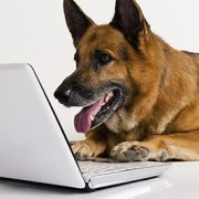 dog email