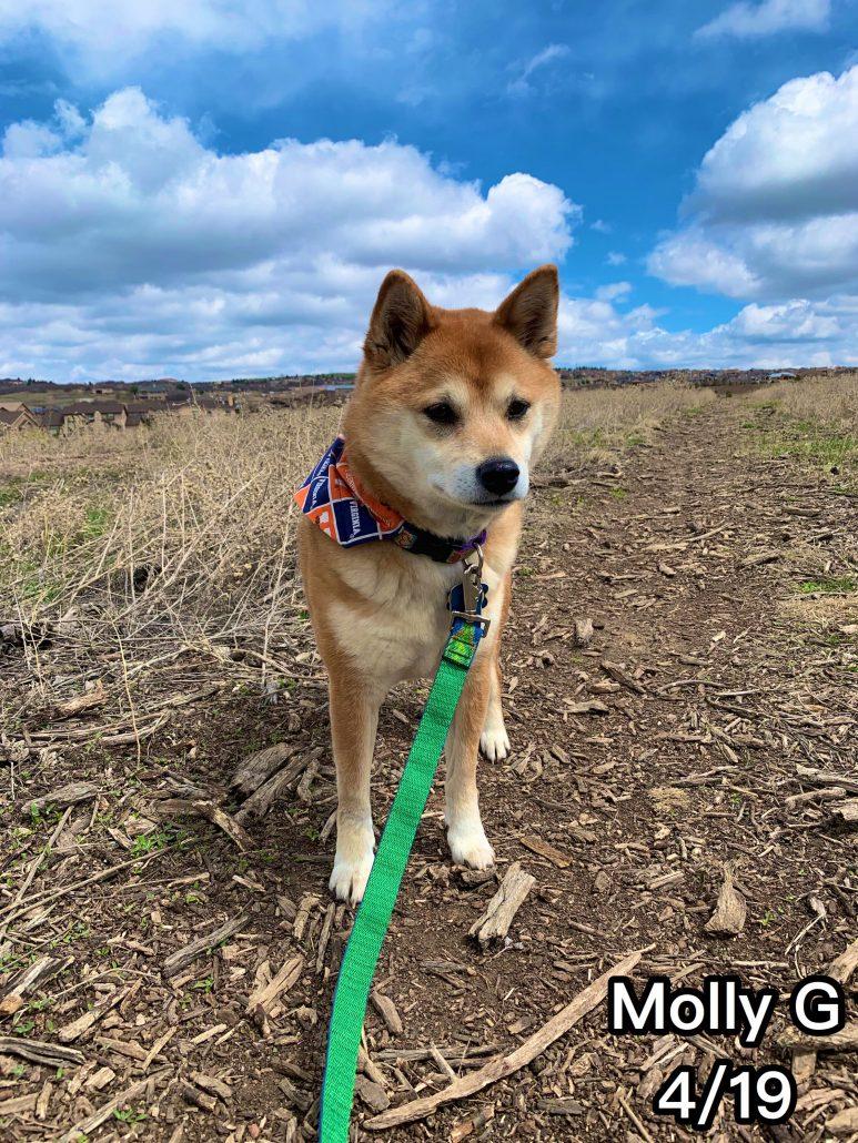 hire dog walker colorado springs