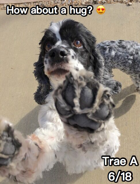 dog field trips colorado springs