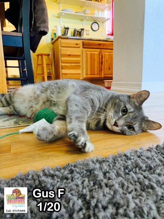 best cat sitters colorado springs