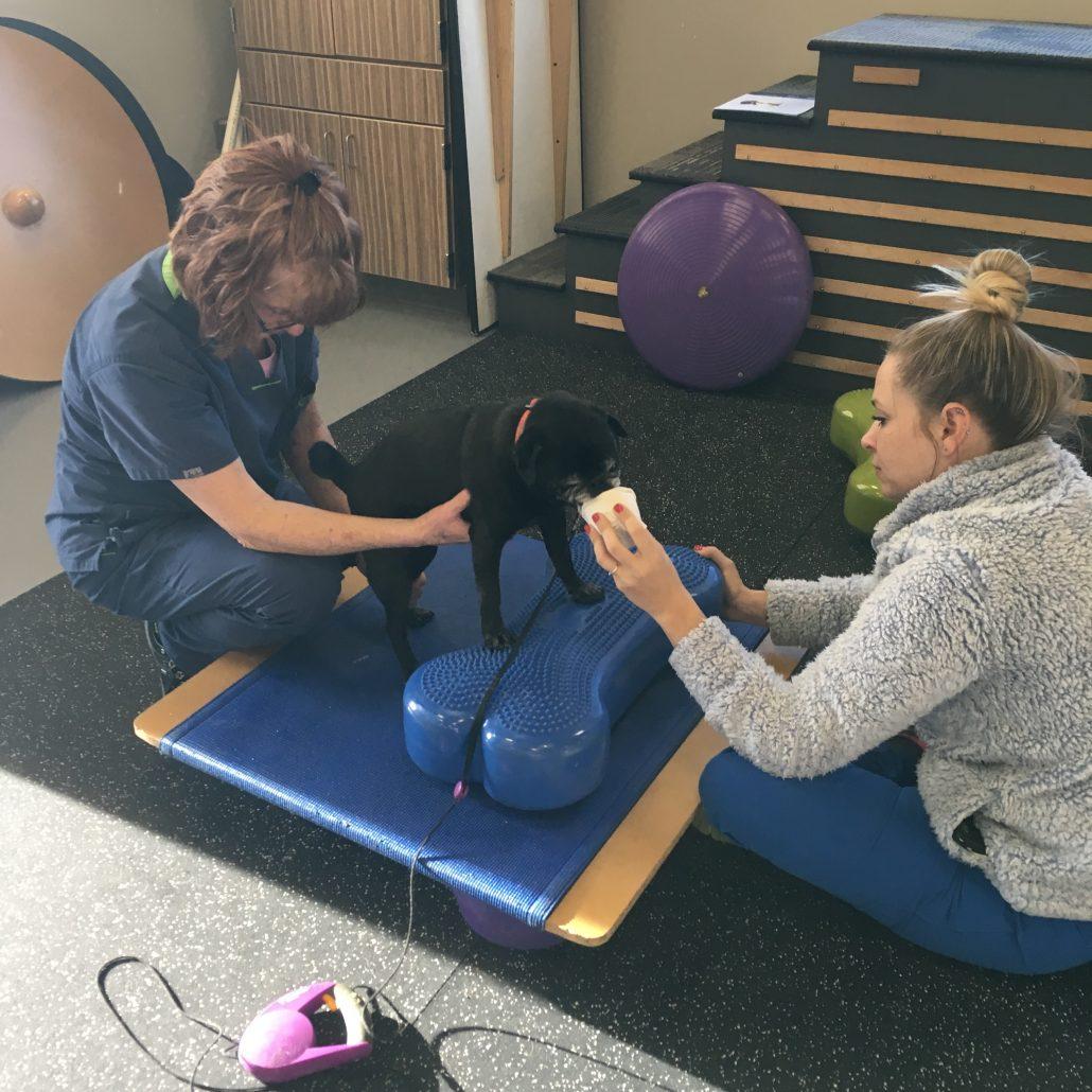 Colorado Canine Orthopedics & Rehab
