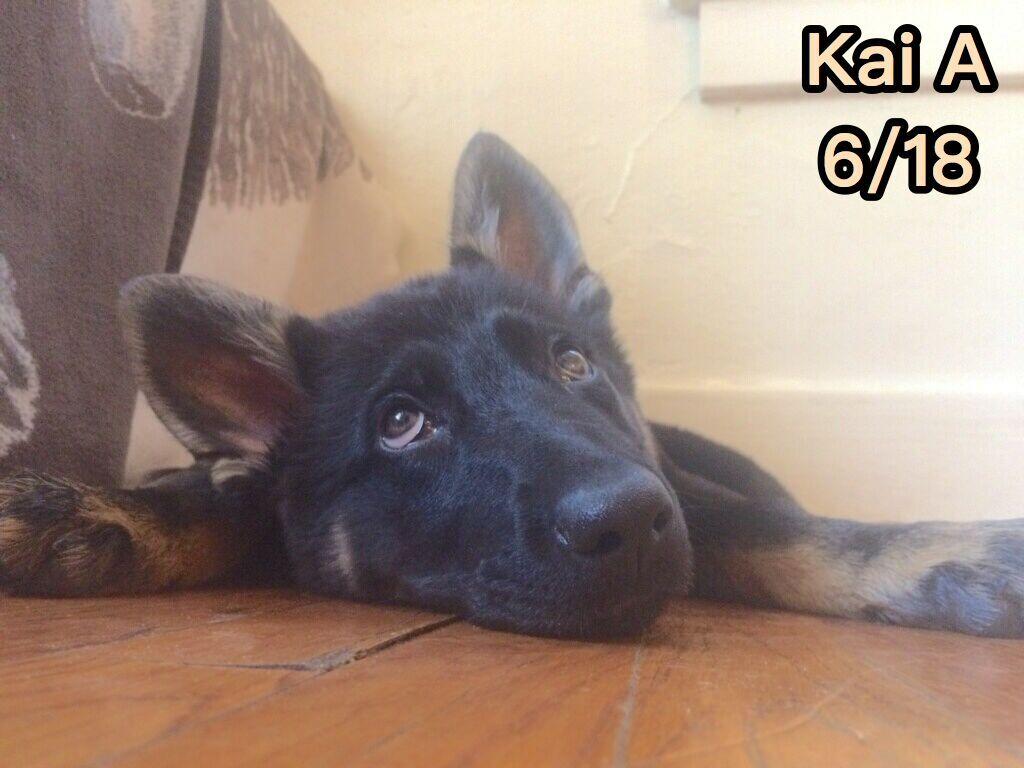 puppy care colorado springs