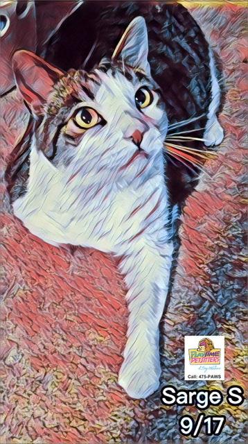 cat sitters in colorado springs in home