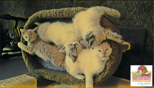 hire a cat sitter in colorado springs