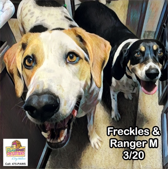 dog walkers in home colorado springs