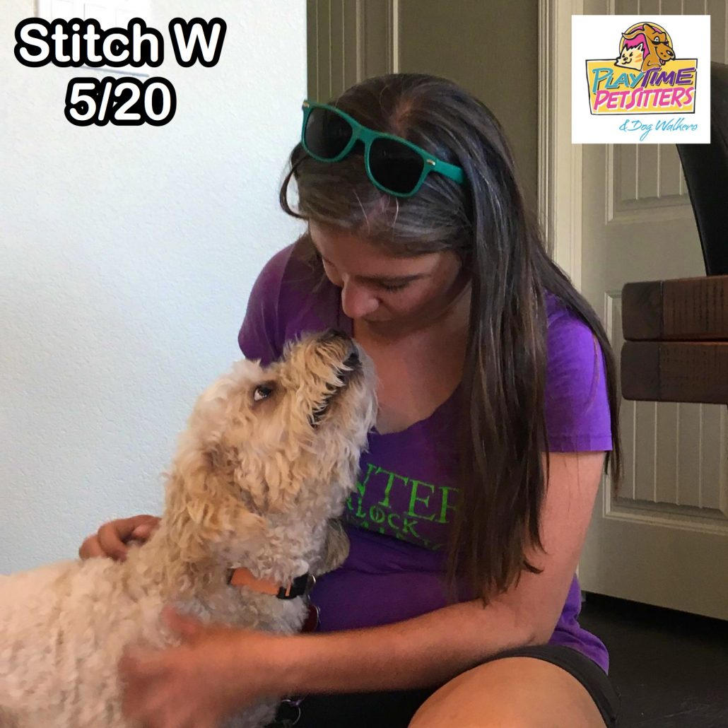 best pet sitters colorado springs
