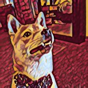 dog walkers 80906