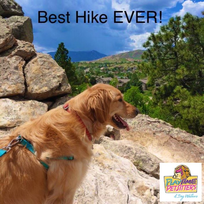 dog hikes colorado springs