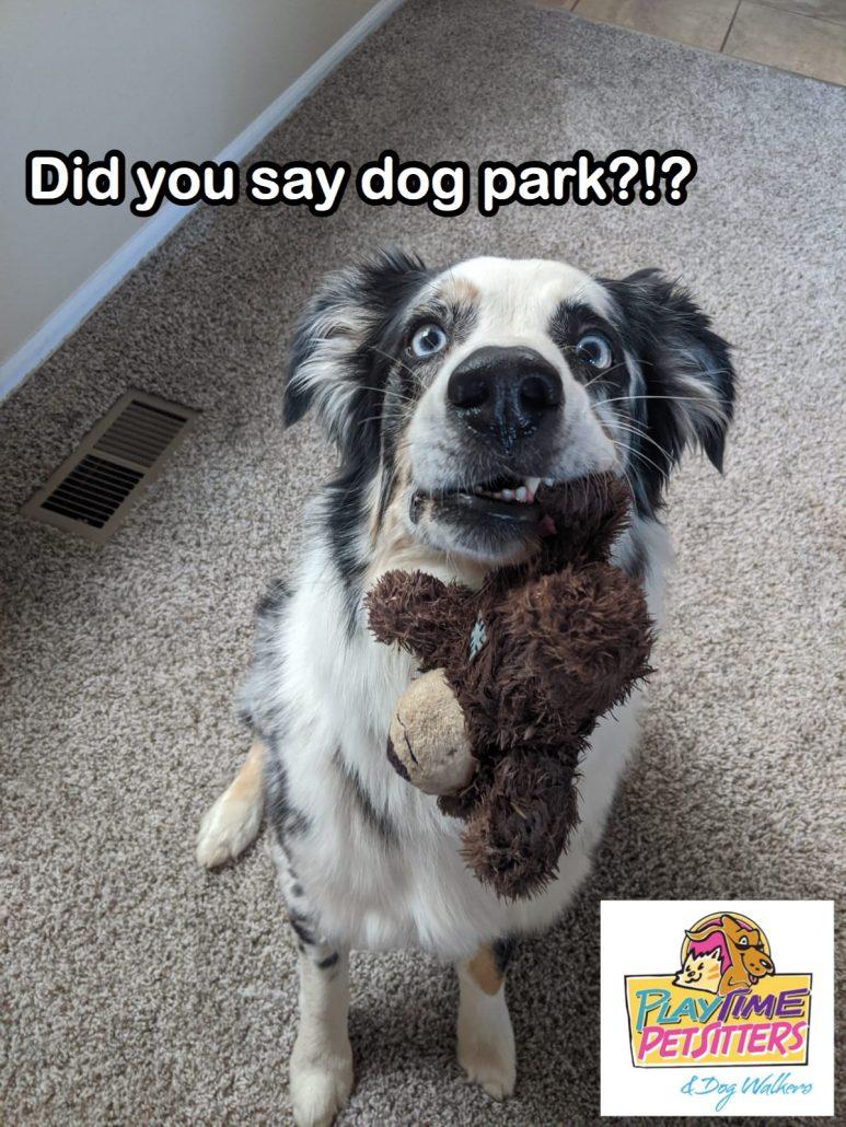 dog park field trips colorado springs