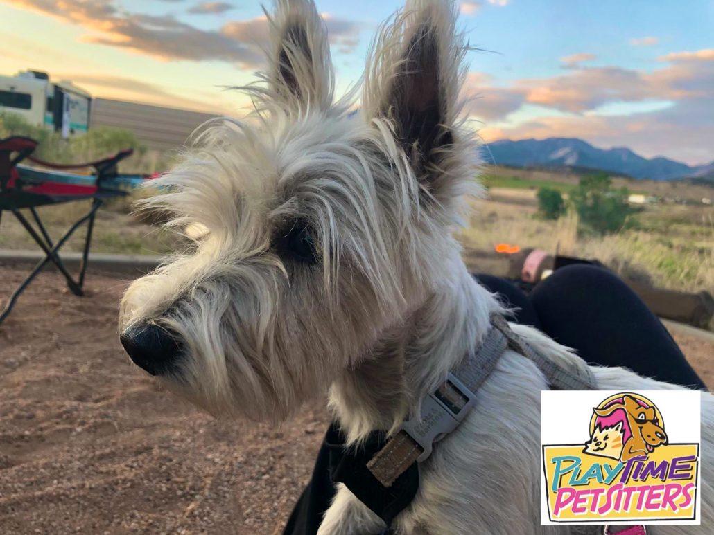 dog hikes colorado springs
