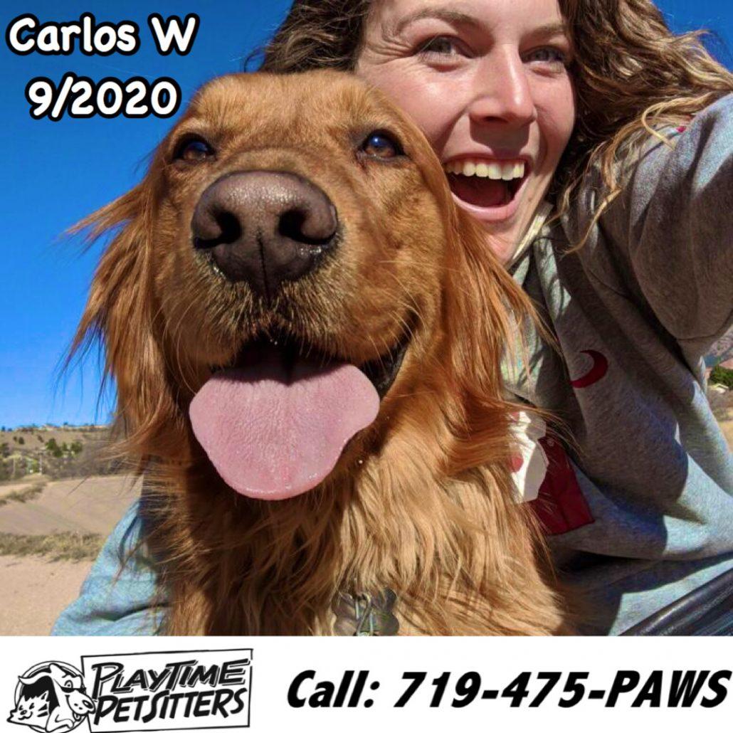 dog walking colorado springs