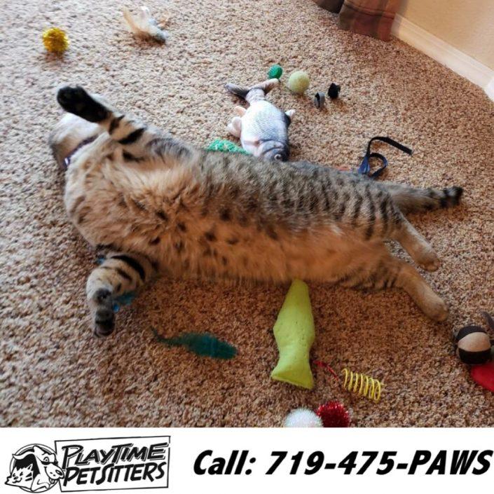 cat sitters colorado springs