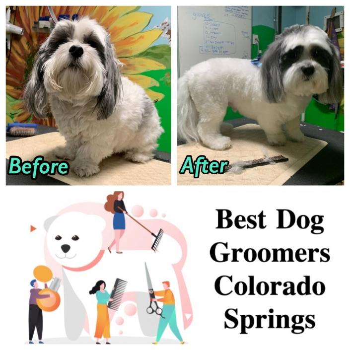 Pet Sitting and Dog Walking Colorado Springs